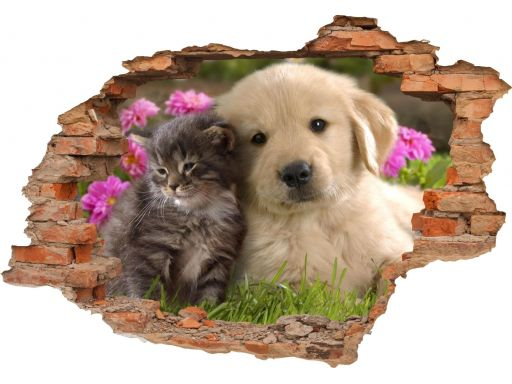Naklejki na ścianę zwierzęta psy koty 3d 100x70cm
